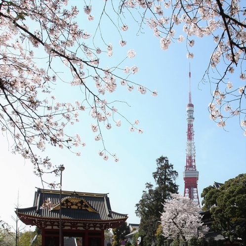 東京タワーと増上寺とサクラ