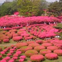 小室山公園つつじ祭り(4月末よりGW期間開催)