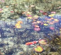 【モネの池】