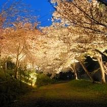 通り抜けの桜ライトUP