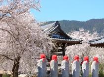 【4月】道光寺・車10分★境内の枝垂れ桜。お地蔵さまと一緒に観賞♪3月下旬からチャンス。
