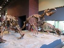 自然の博物館では岩・化石・模型などを展示。日本地質学発祥の地で歴史を学ぼう。当館より徒歩15分。
