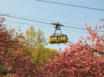 【4月】通り抜けの桜・徒歩20分★中旬から下旬にヤエザクラが見頃。宝登山麓にある1周のコース。