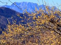 【1・2月】宝登山頂からは両神山や武甲山、さらには秩父の街並みが眺められます♪