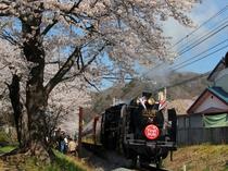 【4月】上長瀞・徒歩15分★3月末よりSL運行開始!上長瀞のさくら小路は、SLの撮影スポットです。
