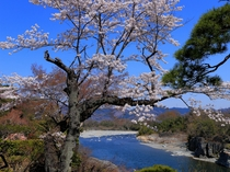 【4月】長生館庭園★桜と長瀞渓谷・荒川を同時観賞できる数少ないスポット!岩畳も望めます♪
