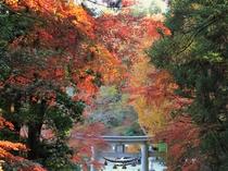 【11月は長瀞紅葉まつり♪】宝登山神社・徒歩15分★日中に行くなら午前からお昼がおすすめ。