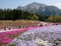 【GW】羊山公園の芝桜・車30分以上★秩父の晩春はなんといっても芝桜!バックに武甲山が映えます♪