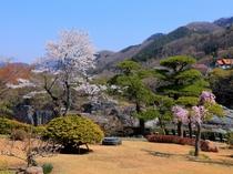 客室から見た庭園(4月頃)