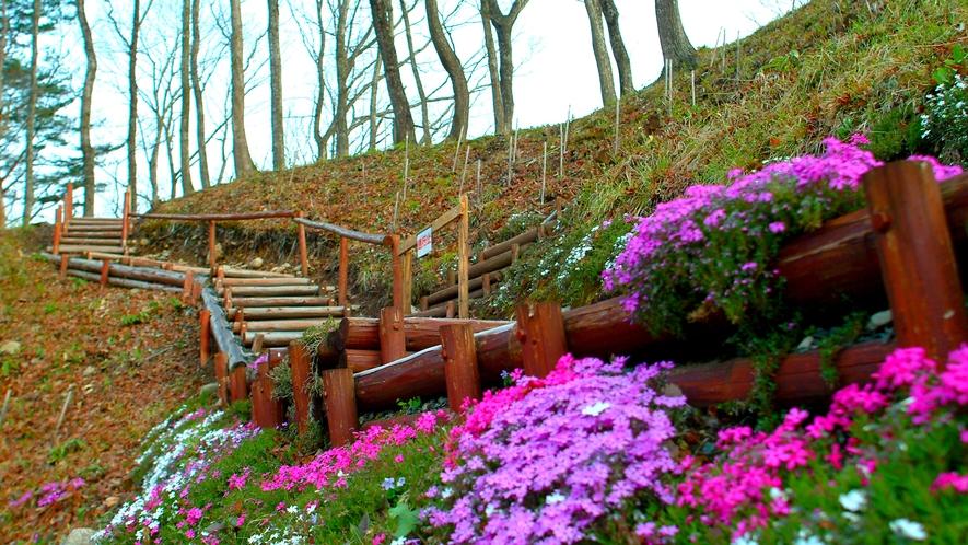 春の愛隣館(庭園)イメージ