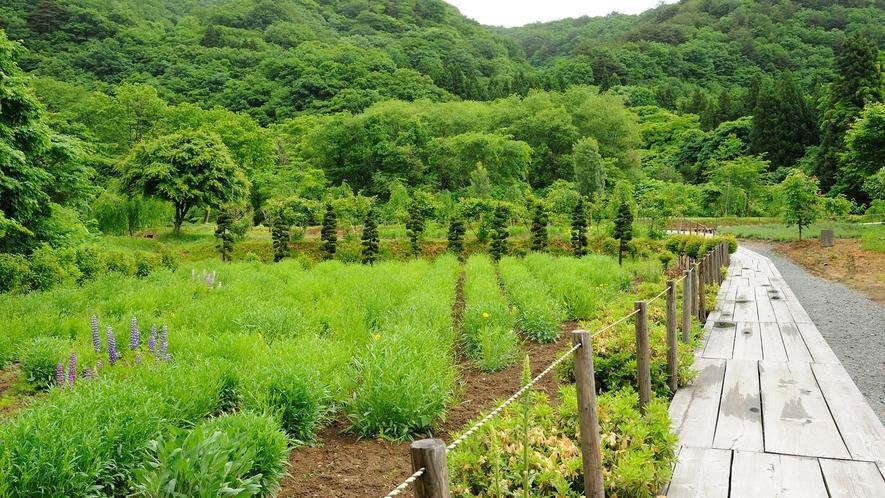 夏の愛隣館(庭園)イメージ
