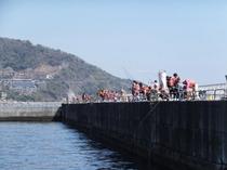 熱海港海釣り