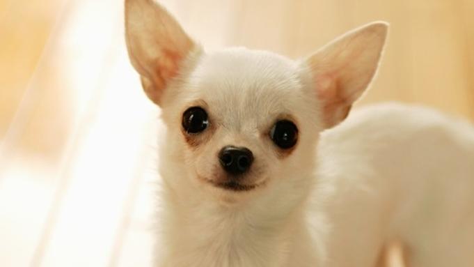 【愛犬同伴OK】ワンちゃんと過ごす寛ぎの旅♪/和食「風の謌会席」