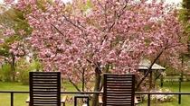 ◆中庭の桜/例年5月頃に、綺麗な桜が咲き誇ります。