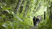 ◆支笏の森「散策路」/野鳥観察したり、季節の花を見たり…美味しい空気を召し上がれ♪