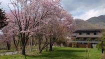 ◆水の謌の中庭 ※春のイメージ