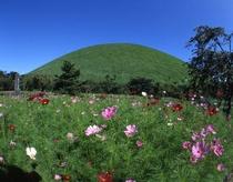 大室山の夏