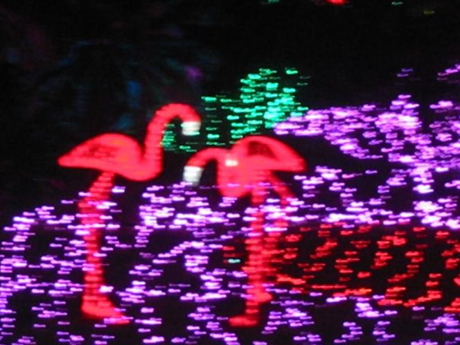 グランイルミ・ピンクのゾーンのフラミンゴ