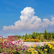 フラワー&ガーデン:夏の澄んだ晴天
