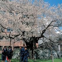 周辺情報:石割桜