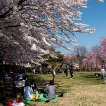 高松公園 桜