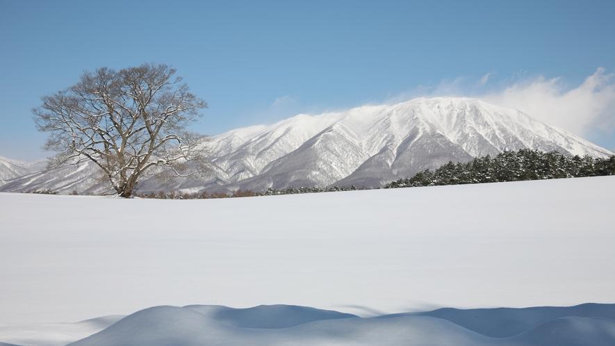 【周辺観光】冬の小岩井一本桜と岩手山。広大な銀世界が広がります。