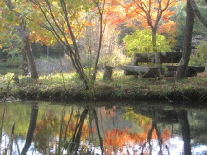 紅葉がきれいな「北大演習林」