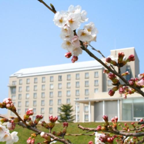 春になると、桜が咲き誇ります*゜