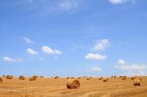 牧草ロール2