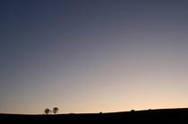 夕暮れの親子の木