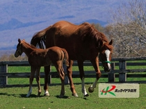 【牧場の馬】