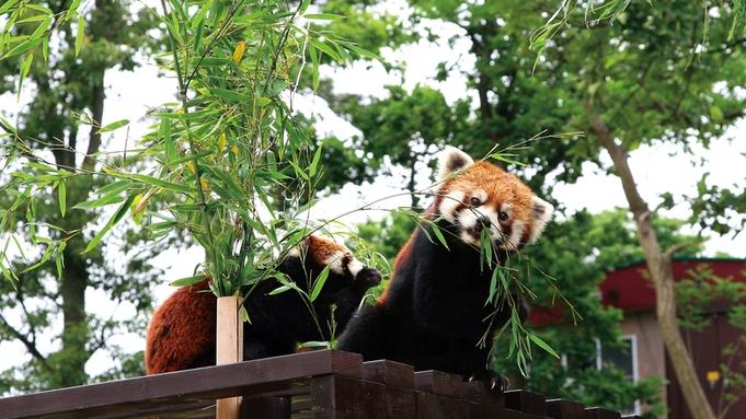 ◆◇◆家族旅行応援◆◇◆大森山動物園「あきぎんオモリンの森」入園券付宿泊プラン
