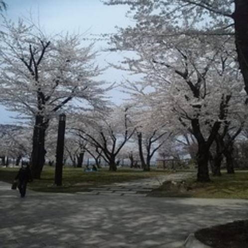 八戸城跡2