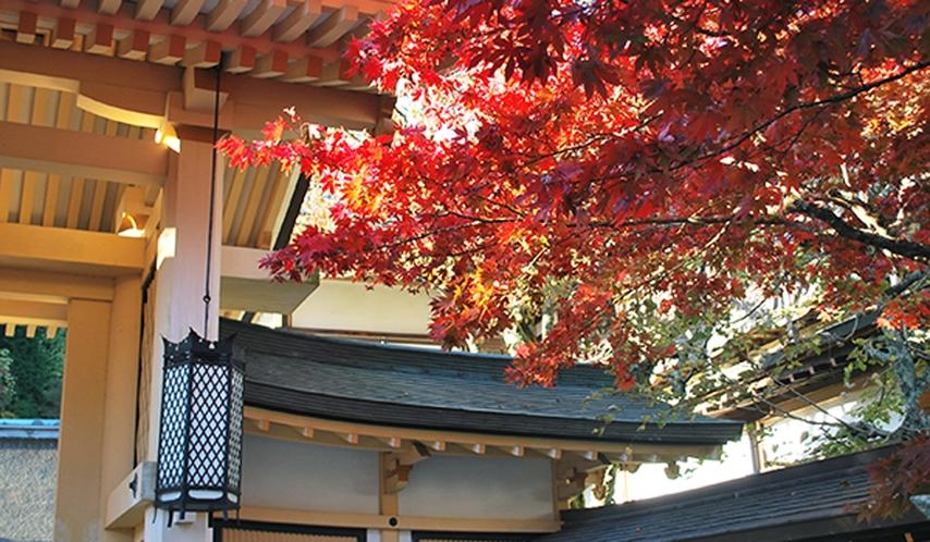 *【11月】標高の高い高野山より紅葉が始まります(10月下旬より)。