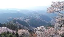 *吉野山・春の山桜【吉野町】散策ルートは上から下へ☆車で約40分程度