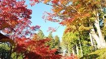 *高野山・秋の紅葉【高野町】10月末~11月初めが見頃