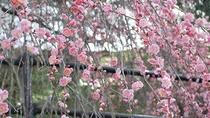 *【3月】約25ヘクタールにわたって約5,000本の梅が咲く「広橋梅林」