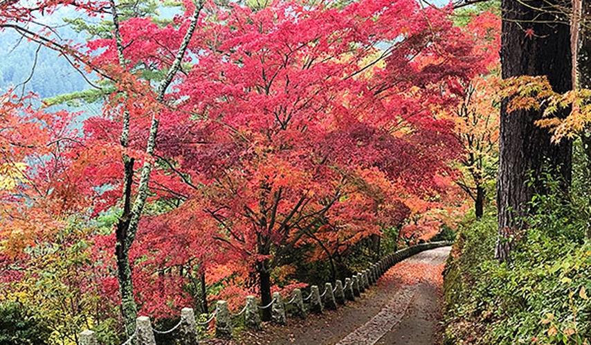 *吉野山・秋の紅葉【吉野町】桜モミジを中心に名所に。電車・バスが便利です。