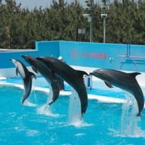 水族館【マリンピア日本海】は海に近く【日本海側で最大級】の水族館