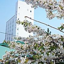男鹿観光ホテル外観(桜)
