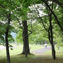 湖畔の整備された遊歩道を散策