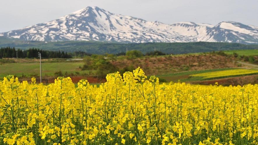 【春】春には菜の花畑が一面に広がります