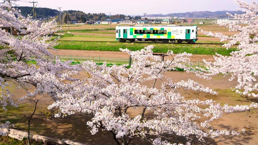 【春】満開の桜が見送ります