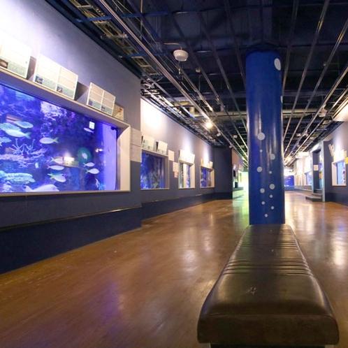 【竹島水族館】展示生物500種類以上!蒲郡の人気スポットです♪