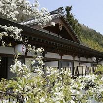 外観(春)樹齢100年超の梨の花