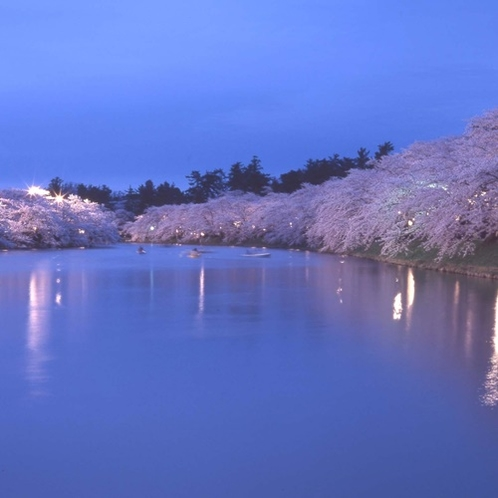 西濠の夜桜